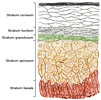 Skinlayers